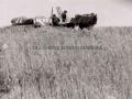 1943 - AEROPORTO MILITARE DI MILO (19)