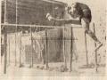 1934 - GIOVANNI CARDELLA