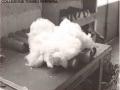 1950 CIRCA - LAVORAZIONE DEL COTONE (5)