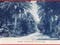 VILLA MARGHERITA - VIALE DELLE PALME - MANNONE (1)